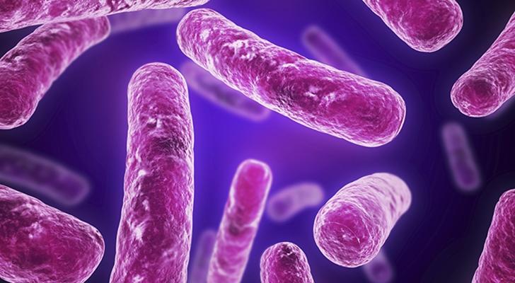 بحث عن البكتيريا والفيروسات Pdf