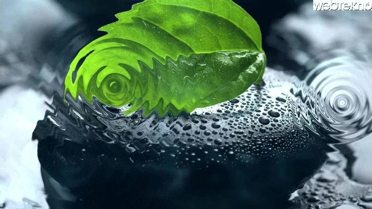 Naturesoundsfor.me