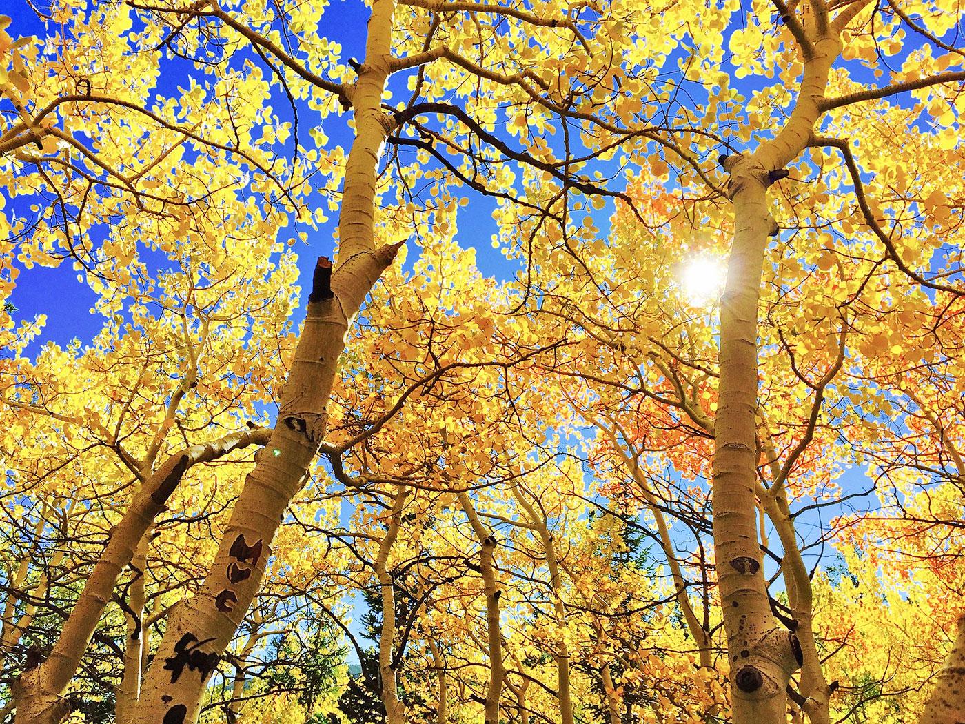 Ağaçlar Sayesinde Elde Edilen Rüzgar Enerjisi