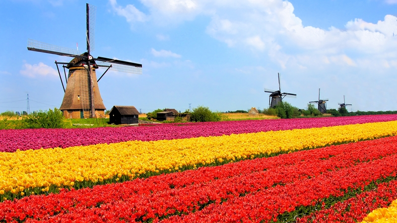 3.Hollanda