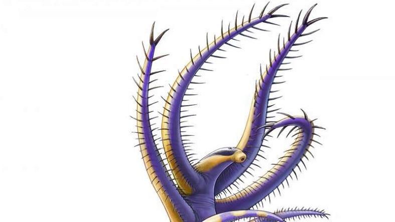 Solucana Benzeyen, 500 Milyon Yıllık Bir Canlı Fosili Keşfedildi!