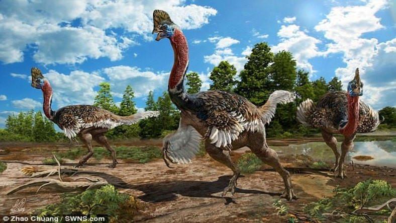 Yeni Bulunan Kanatlı Dinozor Karşı Cinse Kur Yapmak için Görkemli
