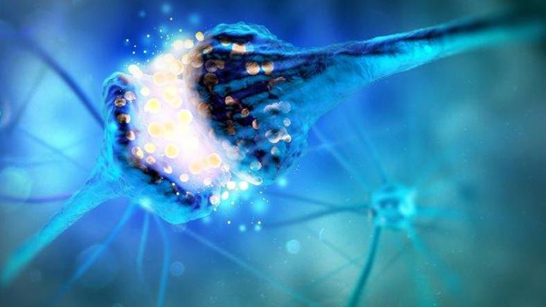 Tıpkı Beynimizdeki Hücreler Gibi Bağlantı Kuran Çip Üretildi! ile ilgili görsel sonucu