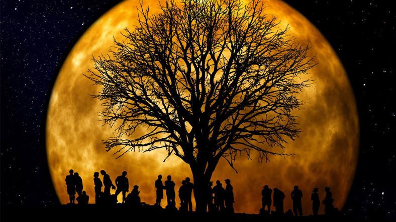 Kayserili Bir Araştırmacı, Soy Ağacında 1300'lü Yıllara Ulaşmanın Formülünü Verdi
