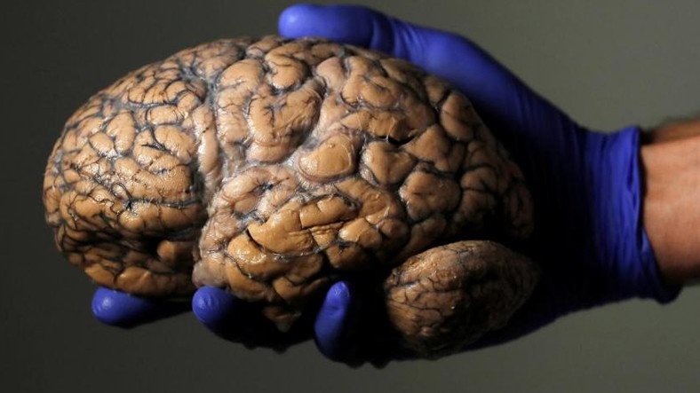 İnsan Beyni, Tarih Boyunca Neden Sürekli Büyümüştür?