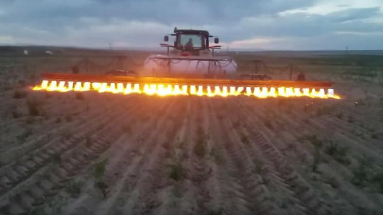 Organik Tarım Çiftliklerini Temizlemek İçin Kullanılan Alevli Silah (Video)
