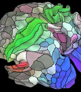 İnsan Beyninin Şimdiye Kadarki En Detaylı Haritası Çıkarıldı!
