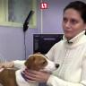 'Rahatsız' Bir Aile, Kulak Tipini Beğenmedikleri Köpekleri İçin Plastik Cerraha Başvurdu