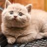Kediler Neden Kutunun Dışında Düşünemezler?