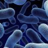 """Uluslararası Uzay İstasyonu'ndaki Deneyde """"Şekil Değiştiren"""" Bakteriler Oluştu!"""