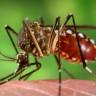 Dahi Parazitlerden 'Sıtma'nın İlaç Bağışıklığını Nasıl Kazandığı Çözüldü