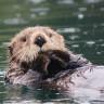 Hayvanat Bahçesinden Hayvanlarına Amazon İncelemesi