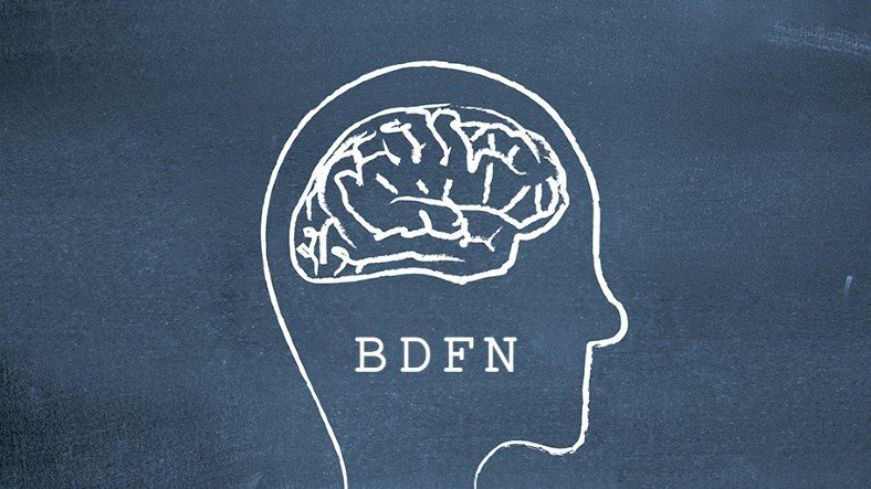 How to Increase the Secretory Protein BDNF in the Brain? 2