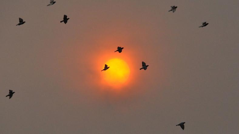 Ophelia Kasırgası, Güneşi Neden Kırmızı Renge Dönüştürdü?