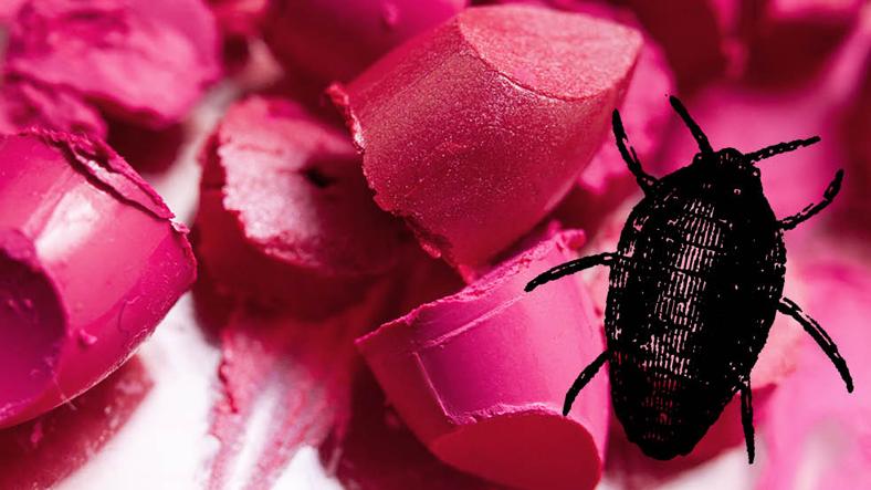 Türkiye'de Satılan İçecek ve Yiyeceklerin Hemen Hepsinde Bulunan Böcek!