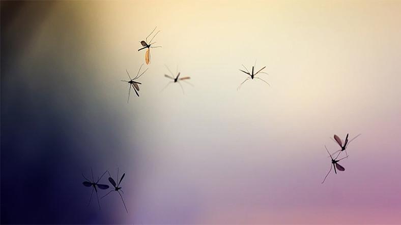 Sivrisinekler, Plastik Atıklarını İnsanlar Dahil Tüm Canlılara Taşıyor