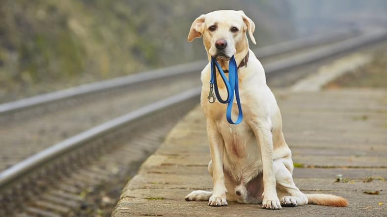 Çinli Yapay Zeka, Kaybolan Köpekleri Burun İzleriyle Buluyor