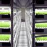 Japonya Bu Tamamen Otomatik Kapalı Çiftlikte Günde 30 Bin Marul Yetiştirecek