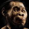 Arkeologlar, Güney Afrika'daki Rising Star Mağarası'nda Yeni bir İnsan Türü Keşfetti!