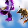 Arıların da İnsanlar Gibi 'Kafası Güzel' Gezdiği Ortaya Çıktı!