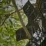 Eski Cep Telefonları Tropikal Ormanları Denetleme ve Korumada Kullanılıyor!