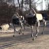 Google'ın Robot Köpeği Spot, Amerikan Ordusuna Yardım İçin Eğitiliyor