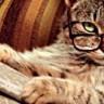 Mizahın Gücü; Belçikalılardan Teröre Karşı Kedili Tweet'ler