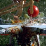 Drone'un Çeşitli Yiyecek Ürünlerini Yavaş Çekimde Paramparça Ettiği Efsane Video