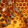 3D Yazıcılar İle Üretilen Bal Petekleri Sayesinde Arılar Daha Verimli Çalışacak