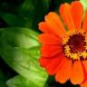 Karşınızda Uzayda Yetişen İlk Çiçek!