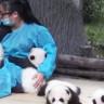 Yalnızca Pandalara Sarılarak Yılda 32 Bin Dolar Kazanılan Dünyanın En İyi İşi