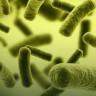 Bakterilerin Uzun Süreli Hafızaya Sahip Olduğu Keşfedildi!