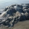 Meksika'nın Acapulco Sahilinde 4 Metrelik Garip Bir Deniz Yaratığı Görüldü