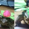 Kurbağalarını Pokemon'a Dönüştüren Yaratıcı Cosplayer!
