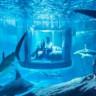 35 Köpek Balığı İle Dolu Bir Akvaryum'da Bir Gece Kalmak Ücretsiz!