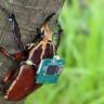 Uzaktan Kumanda İle Kotrol Edilen Yarı Robot Böcekler Geliştiriliyor