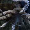 Bilim İnsanları Açıkladı: Ahtapotların DNA'sı Bu Dünyaya Ait Değil!