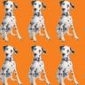 Yüz Bin Dolara Ölen Köpekler Klonlanıyor!