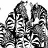 Popolarını Dönmüş Zebraların Arasına Gizlenen Hayvanı Gördünüz mü?