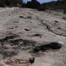 Bolivya'da, Bir Dinozora Ait Olan 80 Milyon Yıllık Ayak İzi Bulundu!