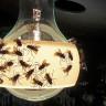 Böcekler, Daha Çok Hangi Lamba Tiplerine Geliyor?