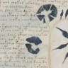 600 Yıl Önce Yazılan ve Sırrı Hala Çözülemeyen Gizemli Kitap