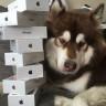 Çinli Bir Adam, Oğlunun 'Köpeğine' 8 Tane iPhone 7 Satın Aldı