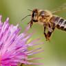 Bilim İnsanları, Arılara Bir Öğretmen Gibi Öğretme Yetisi Kazandırdı!