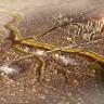 Çinliler, Mısır'a Yeni Bir Başkent Yapacak!