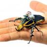 Silahlı Kuvvetlere 'Böcek Drone'lar' Geliyor!