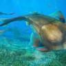400 Milyon Yıllık Balık Fosili İnsan Irkının Evrim Sürecine Işık mı Tutuyor?