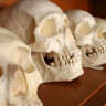 Tüylerinizi Ürpertecek 10 Arkeolojik Gerçek! (+18)