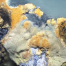 Bilim İnsanları, Canlıların Girdikten Sonra Öldüğü Bir Göl Keşfettiler!