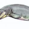 66 Milyon Yıl Önce Antartika'da Yaşamış Dev Deniz Canavarı!
